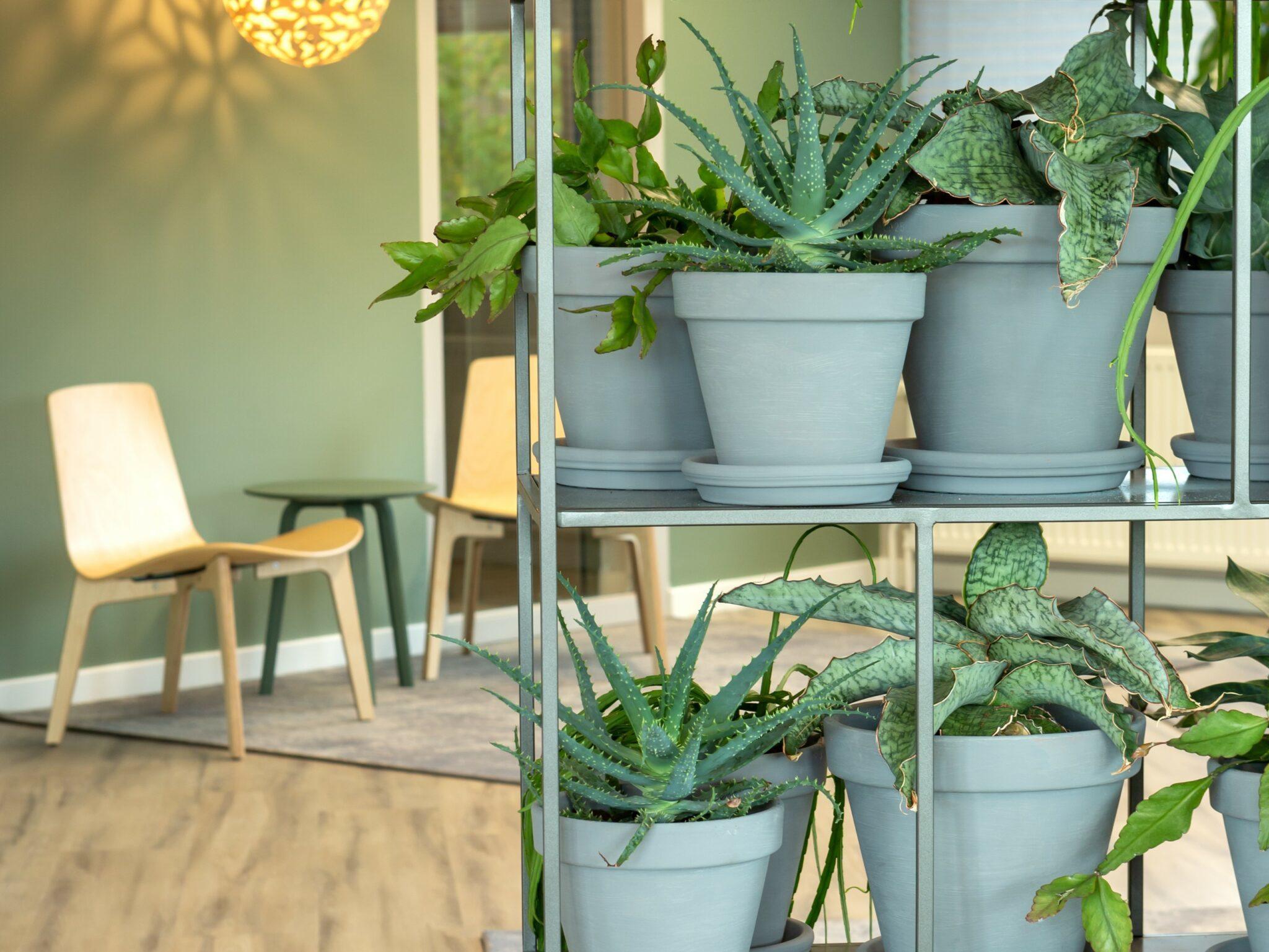 jeugdzorg plantenrek Heering Office Den Haag
