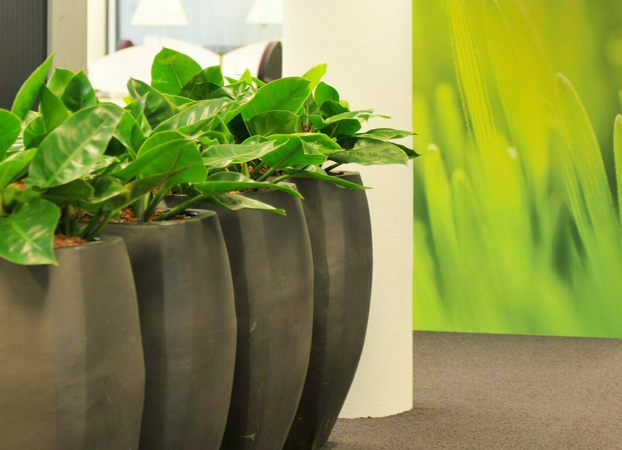 planten op de werkvloer Heering Office Den Haag