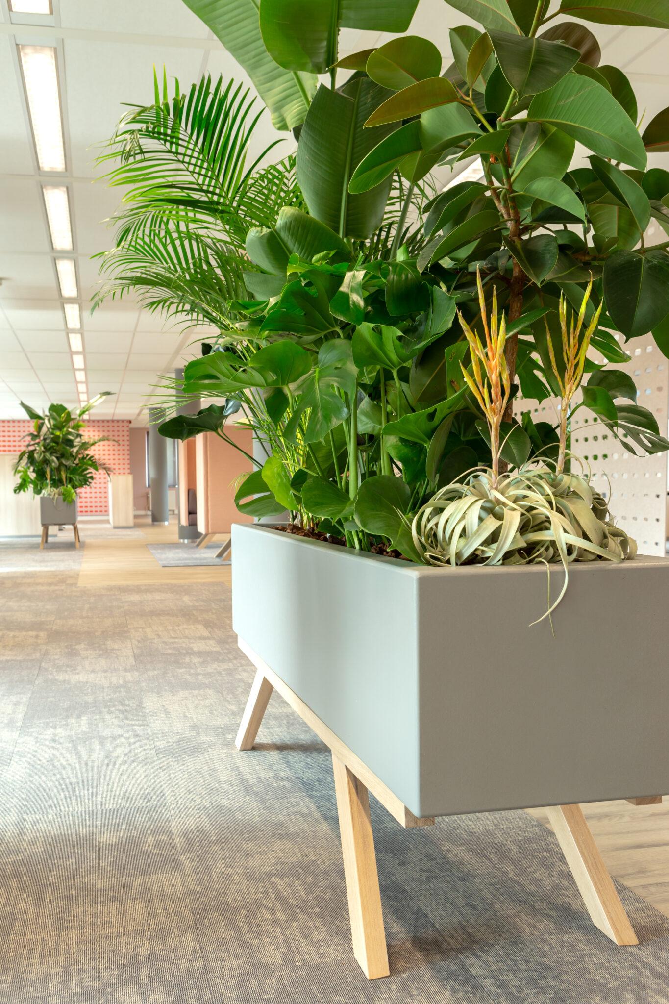 Jeugdzorg Rotterdam planten op kantoor Heering Office Den Haa